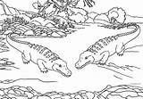 Alligator Coloring Pages Animals Zoo Printable Alligators Animal Crocodile Print Swamp Cool2bkids Bestcoloringpagesforkids Printables Getcolorings Getdrawings sketch template