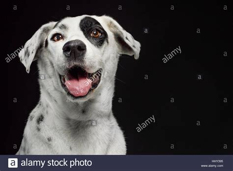 White Dog With Black Spots Stock Photos & White Dog With ...