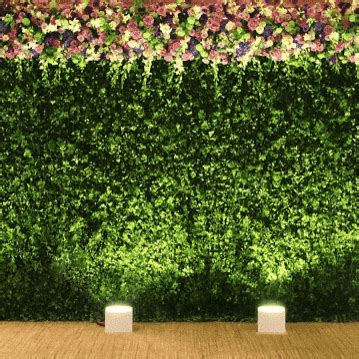 backdrop cm boxwood topiary foliage wall melbourne hire