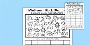 Minibeasts Block Diagram Worksheet    Activity Sheet Romanian