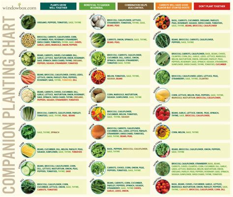 how to plant a vegetable garden companion planting chart for vegetables gardening