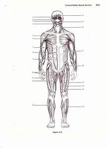 Muscle Diagrams To Label  U2013 Defenderauto Info