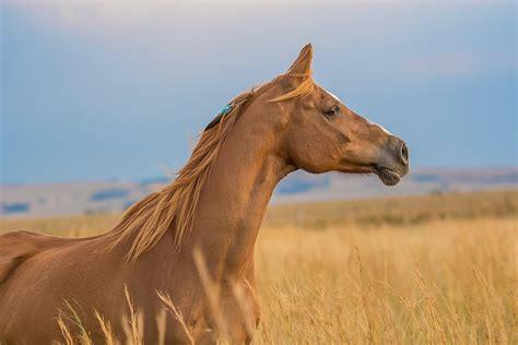 horse horses hives deer shot been sarah mistaken killed young unsplash olive