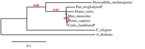Msa alignment t_coffee written 7 months ago by cristianrohr768 • 30. Phylogeny - DimitrovaGen677S09