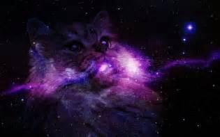 galaxy cats galaxy cat wallpaper wallpapersafari