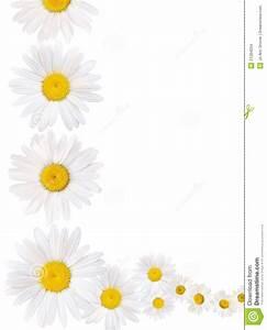Daisy Border Clipart - Clipart Suggest