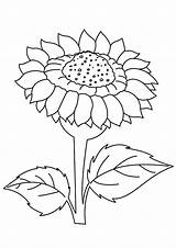 Sunflower Coloring Sunflowers Pages Template Sheets Clipart Drawing Printable Sheet Flowers Adults Dafna Flower Getdrawings Sonnenblume Cute Gogh Van Ausmalbild sketch template