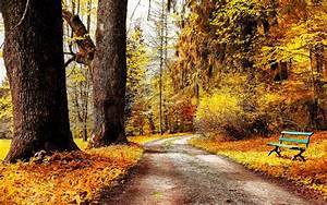 Autumn park nature trees bushes leaves yellow road bench ...
