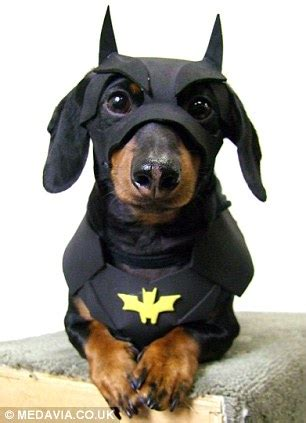 Crusoe the Dachshund becomes internet celebrity with his wacky outfits | Daily Mail Online