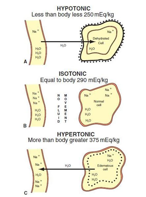 21 best images about Isotonic, Hypotonic, Hypertonic on Pinterest   Canvas prints, Osmotic