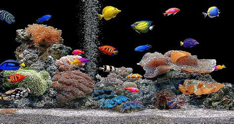 Animated Fish Aquarium Wallpaper Mobile - 3d aquarium wallpaper wallpapersafari