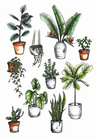 Plant Drawing Plants Indoor Care Guide Sketches