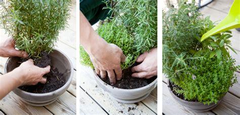 comment planter des herbes aromatiques sur balcon
