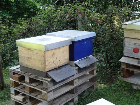 bienenvolk kaufen bienenvolk kleinanzeigen kaufen verkaufen bei deinetierwelt