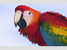 National Bird Of Brazil Macaw 123Countriescom