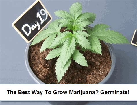 how to grow in your closet a step by step guide