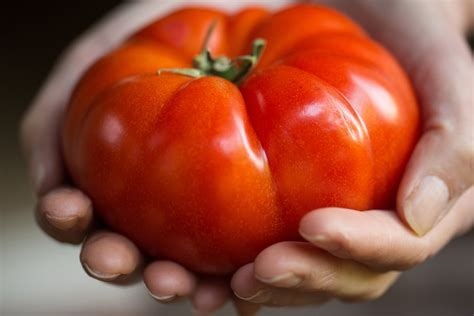 mortgage lifter tomato seeds hometown seeds