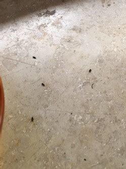 kleine schwarze tierchen immer wieder  fensterbrett