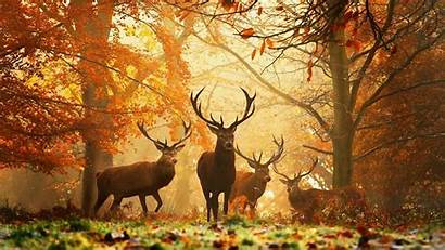 Nature Animals Deer Trees Leaves Grass Wallpapers