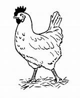 Chicken Fun Coloring Pages Kip sketch template