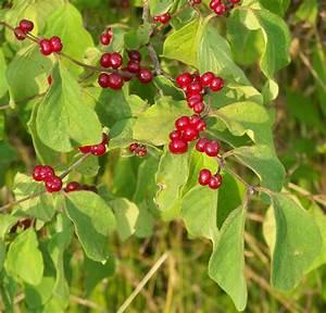 Spot arbre free redwoods ragnarok arksurvival evolved map for Spot eclairage arbre exterieur 8 pot lumineux ledinterieur et jardin deco lumineuse