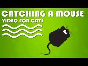 mouse for cats entertainment for cats and chipmunk in
