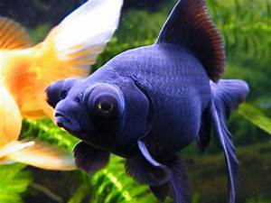 Freshwater Fish | Best Delhi Fish Aquarium services ...
