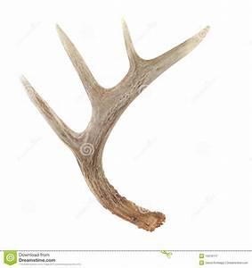 Deer Horn Clipart - Clipart Suggest