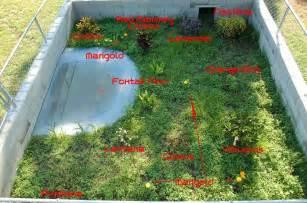 Sulcata Tortoise Habitat Ideas