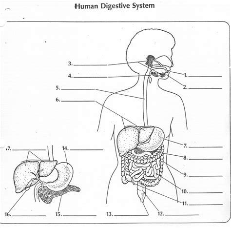 worksheet digestive system labeling worksheet worksheet
