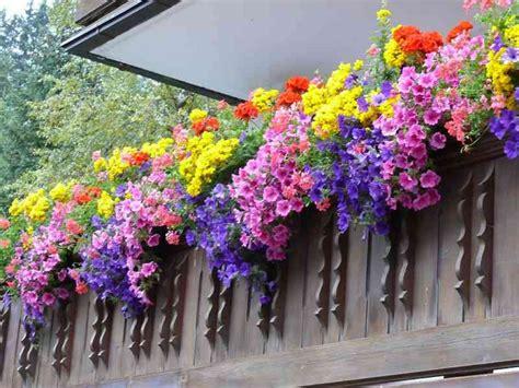 blumen für den balkon blumen f 252 r den balkon sommer blumen dekoration ideen