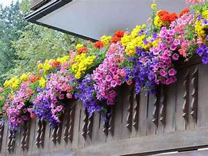 Blumen Für Den Balkon : blumen balkon balkon mit blumen bilderbox bildagentur ~ Lizthompson.info Haus und Dekorationen