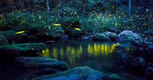 Pretty And Useful : how fireflies are beautiful and useful ~ Watch28wear.com Haus und Dekorationen
