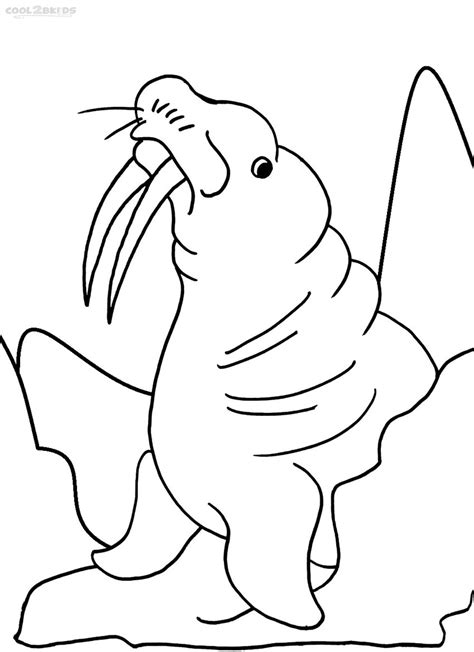 printable walrus coloring pages  kids