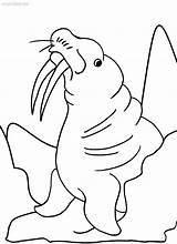 Coloring Walrus Pages Sheets Printable Toddler Cool2bkids Books Getcolorings Info sketch template