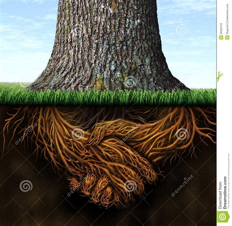 strong business roots stock  image