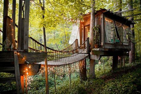 homes   completely enveloped  nature