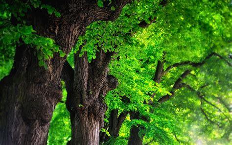 Green Trees  Hd Desktop Wallpapers  4k Hd