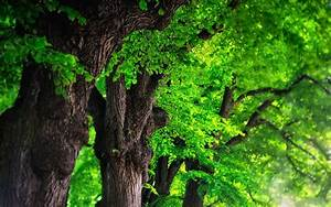 Green, Trees