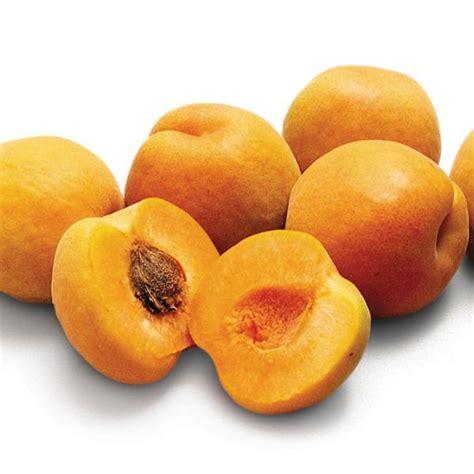 Harglow Apricot - Apricot Trees - Stark Bro's