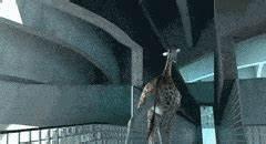 giraffes GIFs | Find, Make & Share Gfycat GIFs