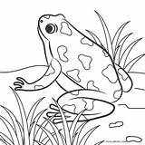 Frog Coloring Pages Printable Cool2bkids sketch template