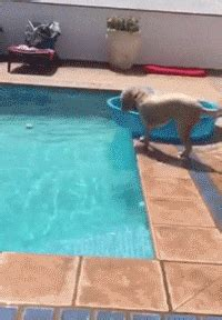smart dog gifs find share  giphy