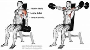 1000+ images about Muscles etc on Pinterest | Health and ...