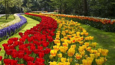 amsterdamse bloemen tulpen flowerfields and keukenhof amsterdam city tours