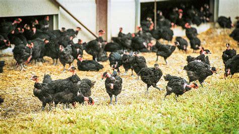 chambre d agriculture du finistere la diversification ne s 39 improvise pas journal paysan breton