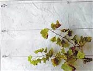 Rankhilfe Wein Edelstahl : d ppner rund ums haus ein gutes gef hl ~ Eleganceandgraceweddings.com Haus und Dekorationen
