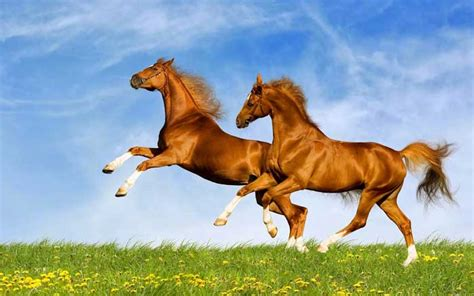 Horse Riding North Devon