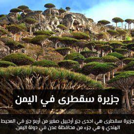 اليمن جزيرة سقطرى صيد السمك طريقة سهلة سبحان الله جزيرة سقطرى Youtube اخبار اليمن يمن تايم ٢١ مشاهدة قبل ٤٦ دقيقة