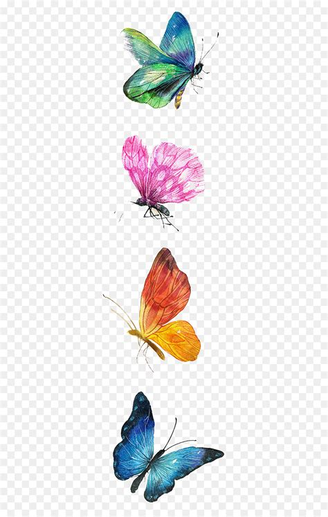 butterfly drawing watercolor painting illustration